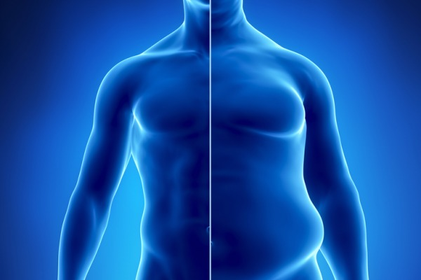 Кортизол накапливает жир Телеэндокринолог