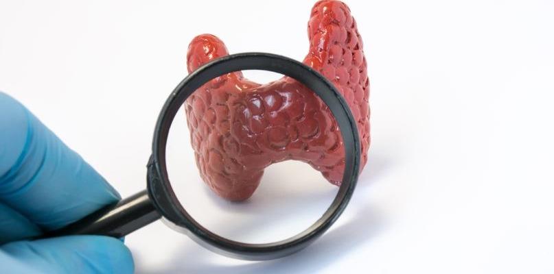 Аутоиммунный тиреоидит - Телеэндокринолог