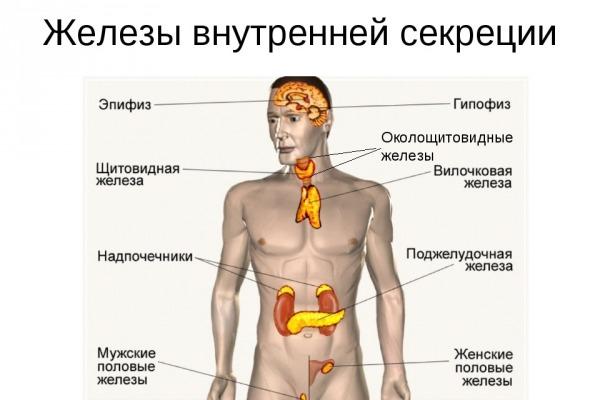 Иерархия гормонов-Телеэендокринолог